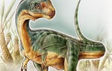 'Chilesaurus', un nuevo dinosaurio que no pertenece a ningún grupo conocido