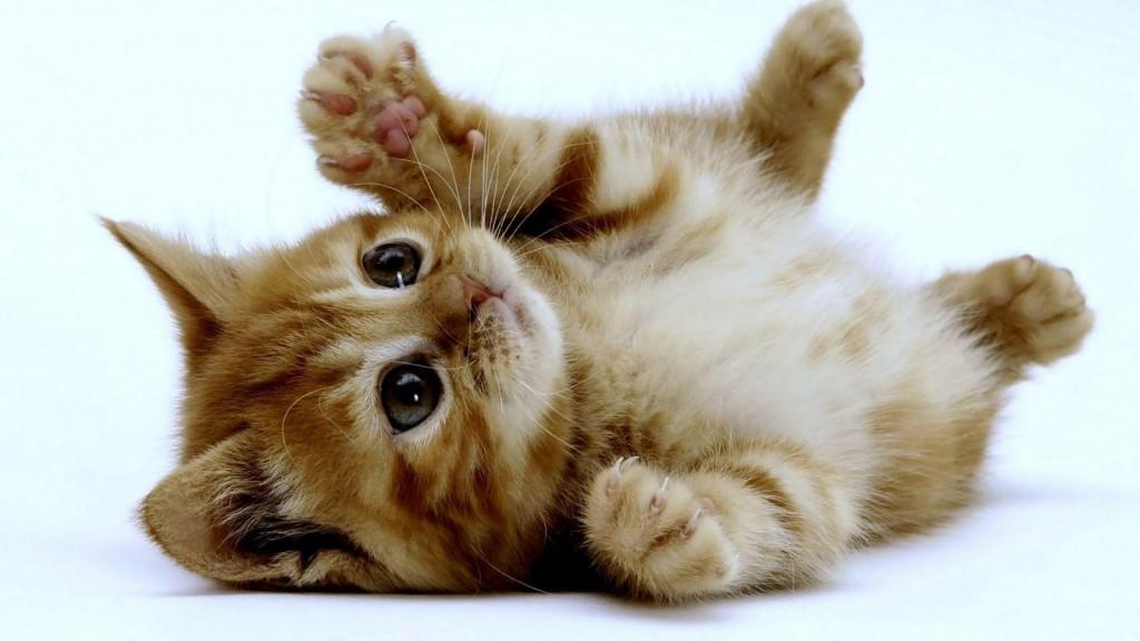 linguagem-corporal-gatos