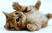 Curiosidades de los gatos que te sorprenderán
