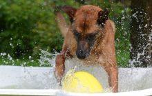 Algunas ideas para divertirte con tu perro este verano