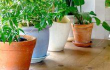 Vitaminas que necesitan las plantas de interior