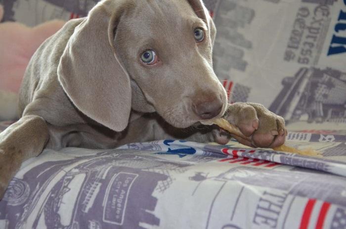 La Clínica Veterinaria Caramuel y la corrección de malas conductas en perros
